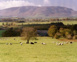 The County Waterford Countryside [Click On Image To Enlarge]